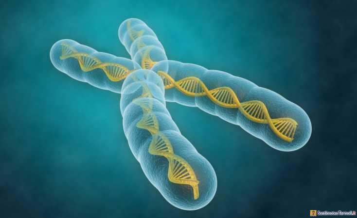 Il cromosoma di Dio è la danza delle relazioni alimentata dall'amore. Santissima Trinità - C