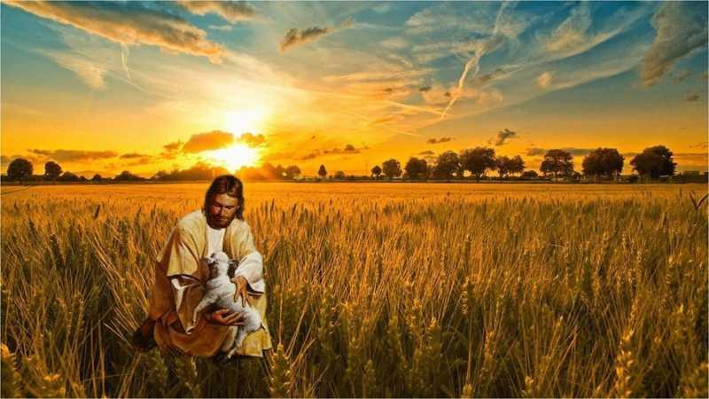 Dio cercatore instancabile di tutti. XXIV Domenica Tempo Ordinario - C