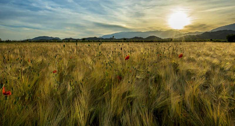 Calunnia e zizzania i mali del parlare e del raccolto. XVI Domenica Tempo Ordinario - Anno A