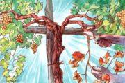 La vite riprende vita in ogni primavera, come me, se innestato in Cristo. V Domenica di Pasqua - B