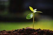 Anche quando il terreno è arido Dio non si stanca di seminare. XI Domenica del Tempo Ordinario
