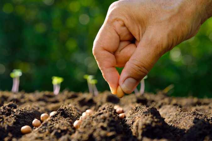 La forza della debolezza di un seme